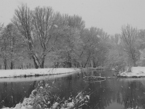 black-and-white-landscape-snow-tree-trees-Favim.com-341526